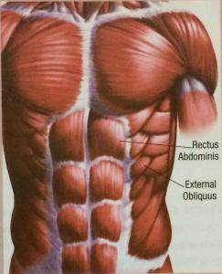 Magmuskler a