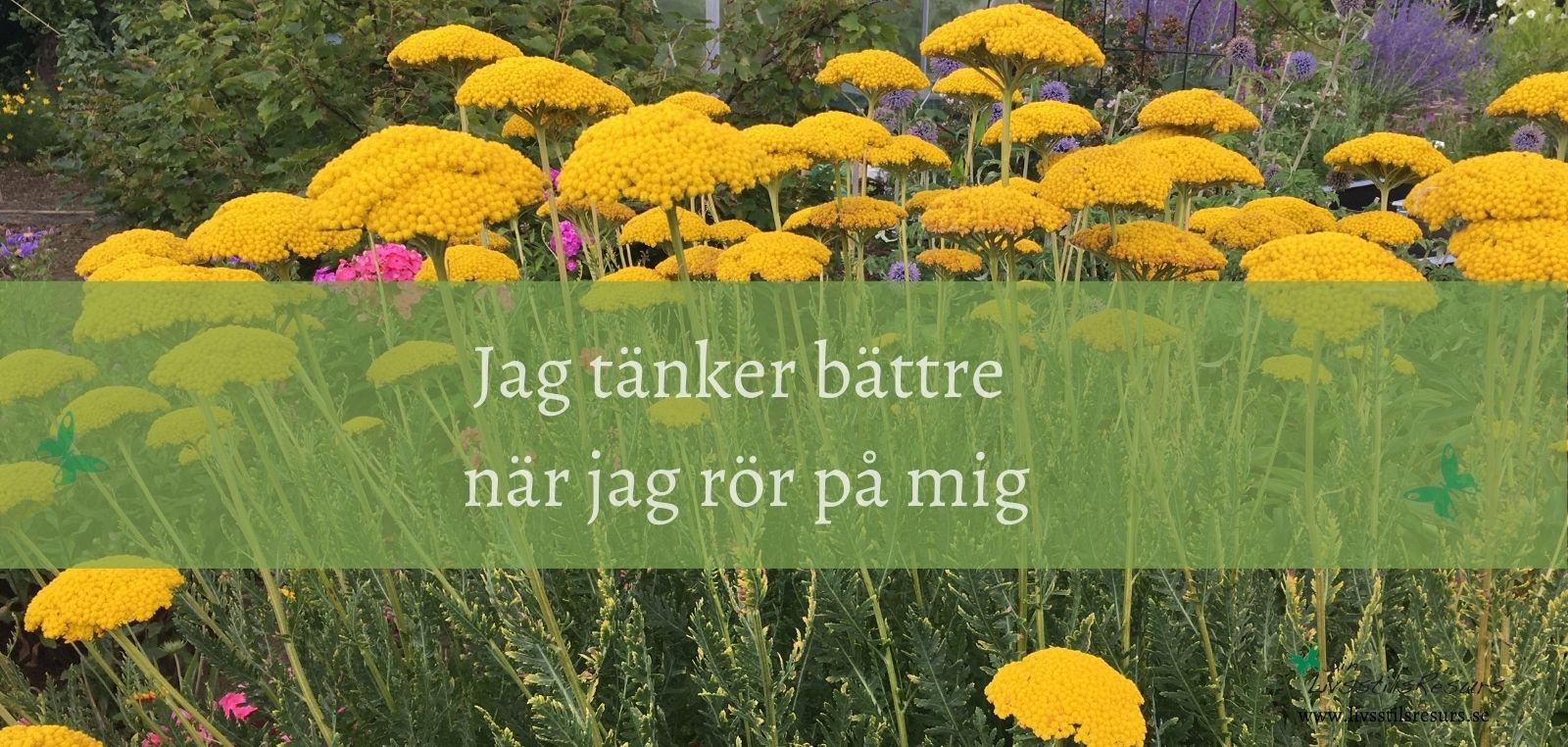 Affirmation för rörelseglädje med blommor i bakgrunden